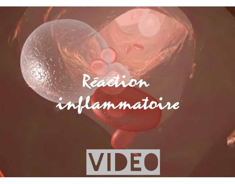 La réaction inflammatoire de la peau 2